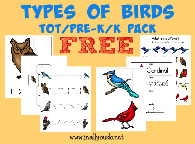 Your little ones will enjoy learning more about different types of birds with this fun Types of Birds Tot Pack!! {32 pages} :: www.inallyoudo.net
