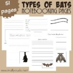 Types of Bats Notebooking Pages {NEW Subscriber freebie}