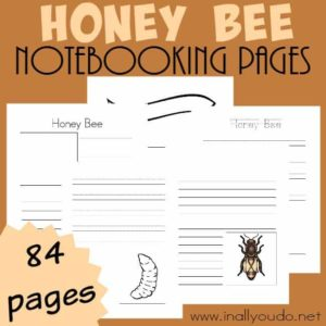 Studying Honey Bees this year? Use these themed Notebooking Pages to record all your knowledge and research! Over 84 pages included!! :: www.inallyoudo.net