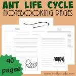 Ant Life Cycle Notebooking Pages & a Link-up