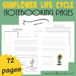 Sunflower Life Cycle Notebooking Pages