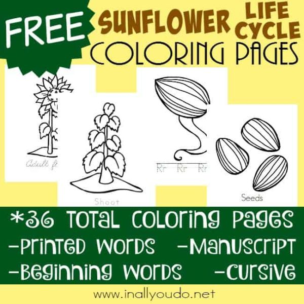 Sunflowers remind me of warm spring and summer weather. Grab these Sunflower Life Cycle Coloring Pages!! Includes 36 pages in 4 handwriting styles. :: www.inallyoudo.net
