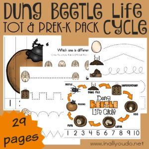 Don't leave your little ones out on the learning. Grab this Dung Beetle Tot & PreK-K Pack to include them in your studies! :: www.inallyoudo.net