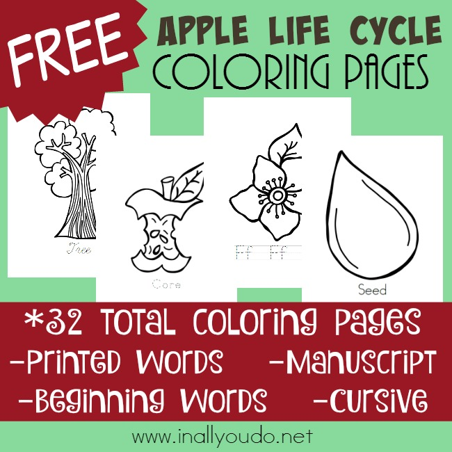 Little ones will love coloring the different stages of the apple with these fun Apple Life Cycle coloring pages! :: www.inallyoudo.net