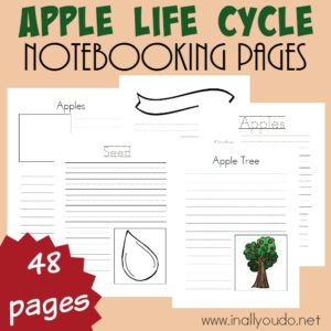 Grab these Apple Life Cycle Notebooking pages to help kids record what they learn about Apples and their life cycle. {48 pages} :: www.inallyoudo.net